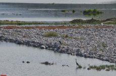 Ενημέρωση του Φορέα Διαχείρισης για τα νεκρά πτηνά στην Κάρλα