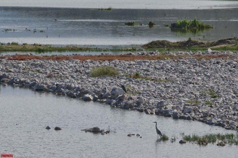 Απαγόρευση αλιείας  στα εσωτερικά ύδατα της Θεσσαλίας λόγω αναπαραγωγής των αλιευμάτων
