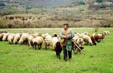 Πληρώνονται σήμερα 29 εκατ. ευρώ σε 7.000 δικαιούχους του προγράμματος Βιολογικής Κτηνοτροφίας