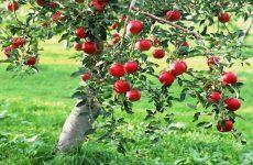 Συστάσεις σε μηλοκαλλιεργητές για ψεκασμούς