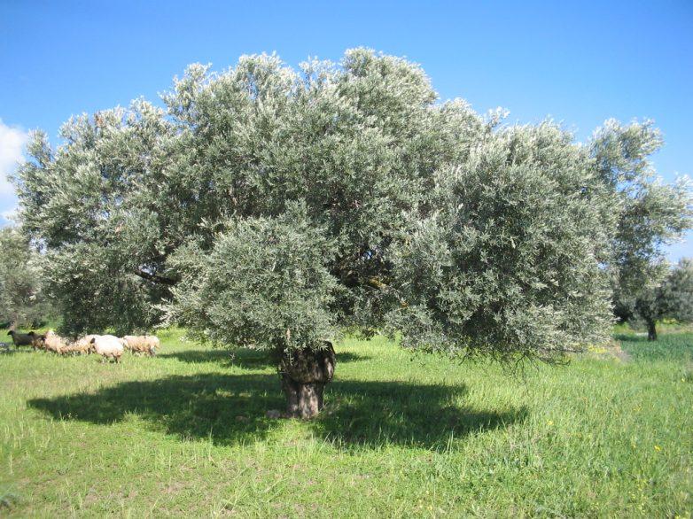 Ημερίδα για την καταπολέμηση της μύγας της Μεσογείου, τον δάκο της ελιάς και τη ραγολέτιδα της κερασιάς στο Βόλο