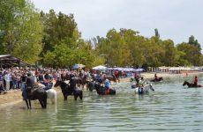 Αγιάζονται τ' άλογα στα Καλά Νερά