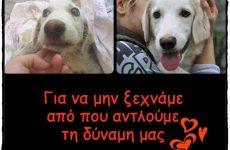 Ενημέρωση για τα ζώα από το Σωματείο «Αδέσποτοι Εθελοντές Λάρισας»