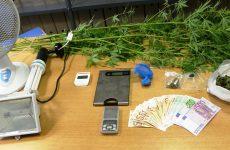 Σύλληψη δύο Βολιωτών για διακίνηση ναρκωτικών και καλλιέργεια δενδρυλλίων κάνναβης