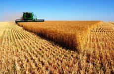 Συστάσεις για την αντιμετώπιση τυχόν ασθενειών σε σιτοκαλλιέργειες