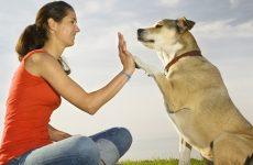 Μάθετε να ακούτε τον σκύλο σας