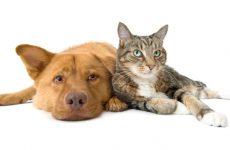 Εμβολιασμός σκυλιών και γατιών από το Δίκτυο Ανταλλαγών και Αλληλεγγύης Μαγνησίας