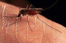 Καταπολέμηση  κουνουπιών στις Π.Ε. Μαγνησίας & Σποράδων