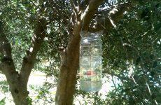 Πληρωμές  για βιολογική γεωργία στη Μαγνησία