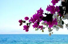 Μη ελκυστικός προορισμός για ξένες επενδύσεις η Ελλάδα