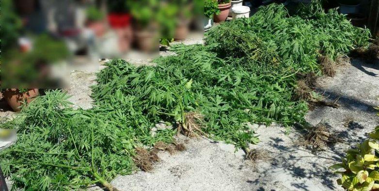 Καλλιεργούσαν δενδρύλλια κάνναβης στη Δράκεια