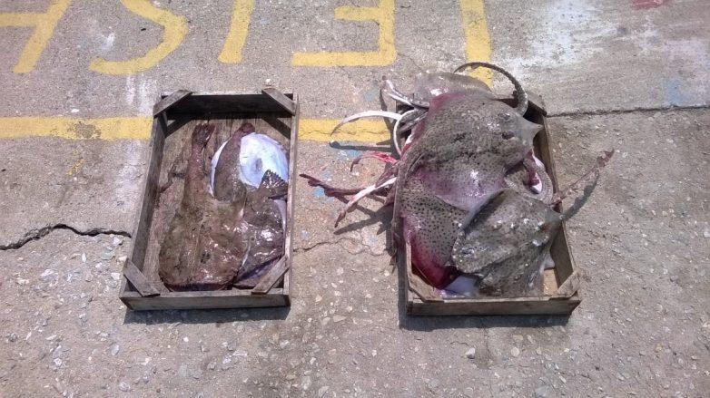 Την ψαριά επαγγελματία αλιέα κατέσχεσαν άνδρες του Λιμεναρχείου Αλονήσσου