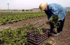 16,7 εκατ. ευρώ από την Kοινή Γεωργική Πολιτική (ΚΓΠ) επιστρέφονται στους Έλληνες αγρότες
