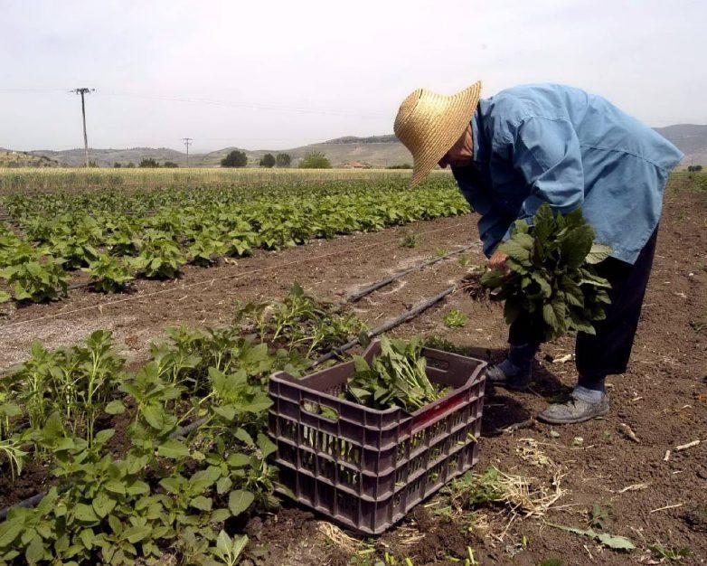 Τον Αύγουστο οι πρόωρες συντάξεις και η φορολόγηση αγροτών
