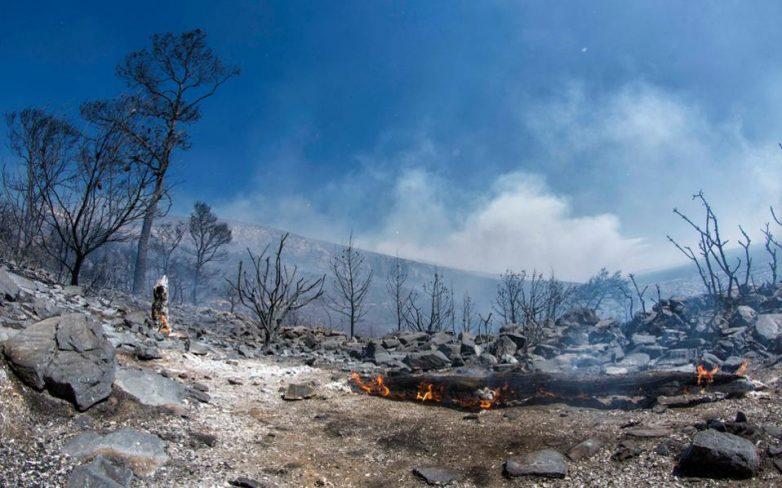 Οικολόγοι Πράσινοι Μαγνησίας για δασικές πυρκαγιές