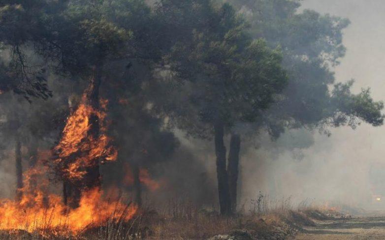 Μεγάλη πυρκαγιά στο δάσος της Στροφυλιάς