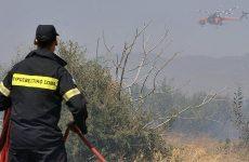 Κάηκαν δασική έκταση και καλαμιές στην Πέρδικα Αλμυρού