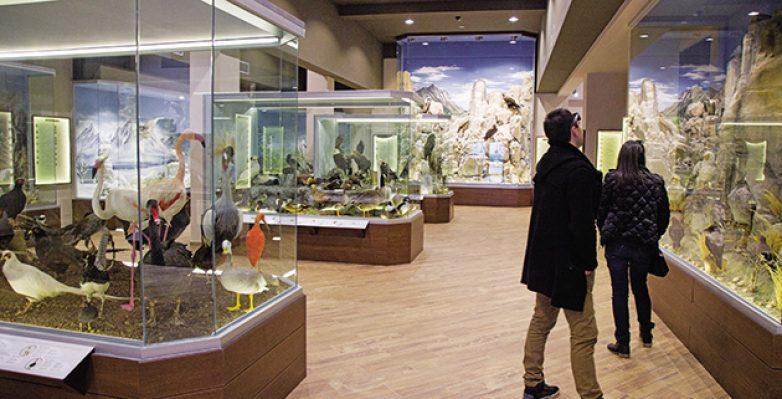 Μουσείο Φυσικής Ιστορίας Μετεώρων και Μουσείο Μανιταριών στην Καλαμπάκα