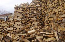 Ποινή 18 μηνών με αναστολή σε 73χρονο που έκοψε παράνομα 30 τόνους ξύλα