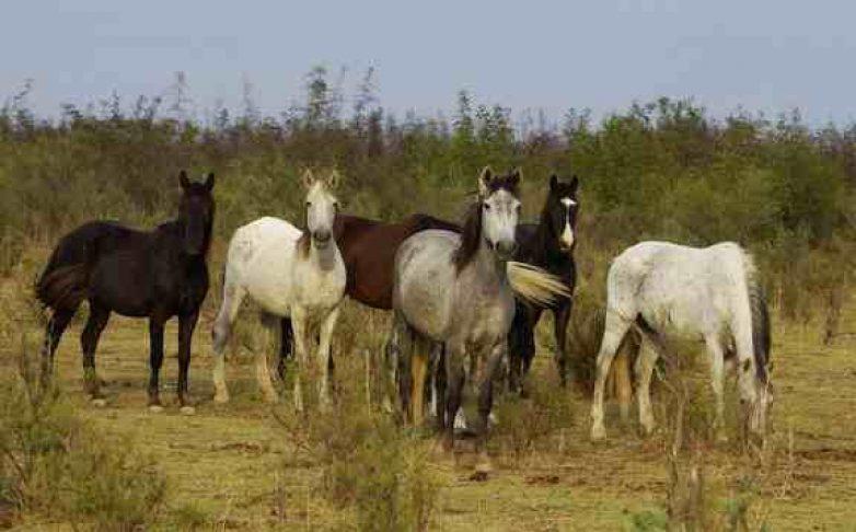 Ανετράπη νταλίκα φορτωμένη με άλογα