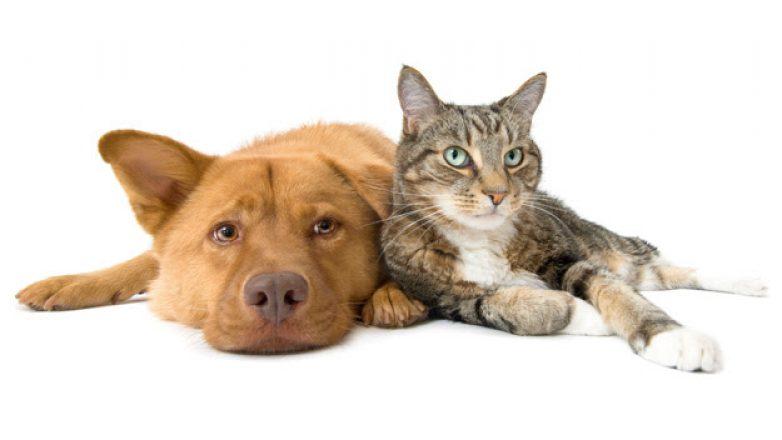 Εμβολιασμός σκυλιών και γατιών το Σάββατο