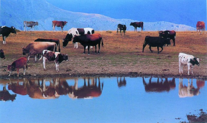 Ενημέρωση των κτηνοτρόφων για την προφύλαξη από τη οζώδη δερματίτιδα