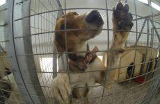 Κουφάρια ζώων έξω από το Κυνοκομείο Γλαφυρών καταγγέλλουν οι ζωόφιλοι