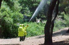 Kαταπολέμηση του δάκου της ελιάς σε Μηλιές, Καλά Νερά και Σέσκλο