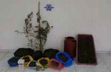 Δενδρύλλια κάνναβης καλλιεργούσε 32χρονη στην αυλή του σπιτιού της