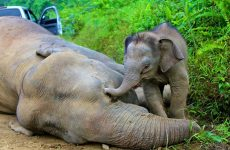 Ζιμπάμπουε: Μαζική δηλητηρίαση ελεφάντων, 22 ζώα βρέθηκαν νεκρά