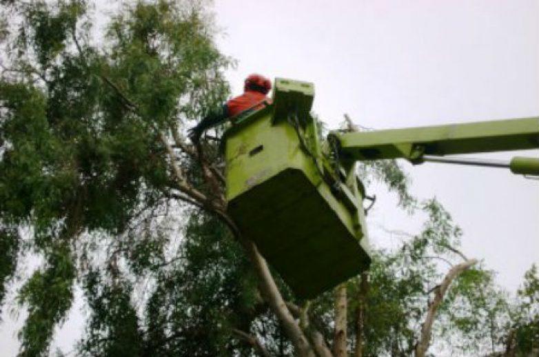 Συνεχίζονται οι εργασίες κλαδέματος  των δέντρων στην οδό Ζάχου