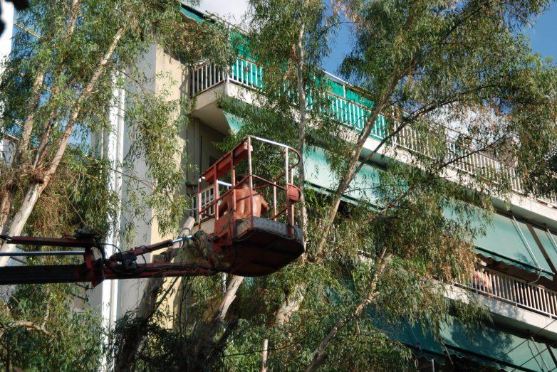 Καταγγελία Ενεργών Βολιωτών στην εισαγγελία για το καρατόμηση δέντρων