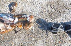 Βολιώτες ψάρευαν με ψαροτούφεκα στη Μηλίνα