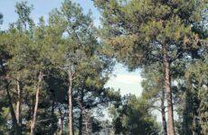 Οι Οικολόγοι Πράσινοι για  το νομοσχέδιο περί δασικών χαρτών