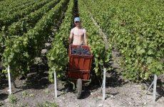 Στο ΣτΕ οι οινοπαραγωγοί κατά του Ειδικού Φόρου Κατανάλωσης