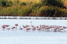 Δικαίωση του Δημοσίου στη διένεξη με τη Μονή Βατοπεδίου για τη λίμνη Βιστωνίδα