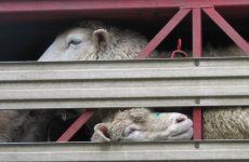 Οι Οικολόγοι Πράσινοι για την Παγκόσμια Ημέρα των Ζώων