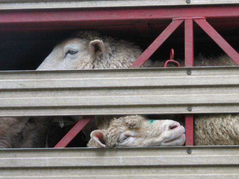 Διεξαγωγή σεμιναρίου κατάρτισης προσωπικού μεταφορέων ζώντων ζώων