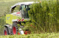 Δημόσια ηλεκτρονική διαβούλευση για τις προϋποθέσεις καλλιέργειας βιομηχανικής κάνναβης