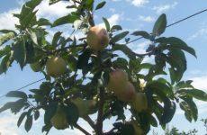 Καθορίστηκαν τα ποσά των συνδεδεμένων ενισχύσεων για επτά καλλιέργειες