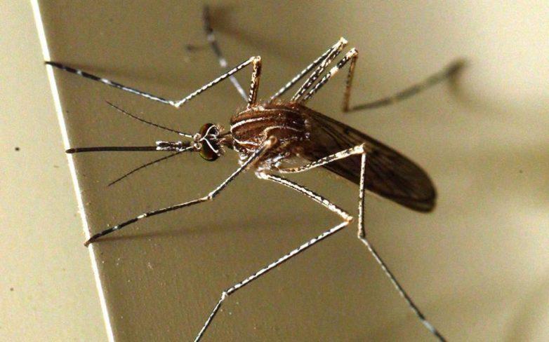 Καταγγελία Ιατρικού Συλλόγου Αθηνών για ιό Δυτικού Νείλου: Η χώρα είναι αθωράκιστη
