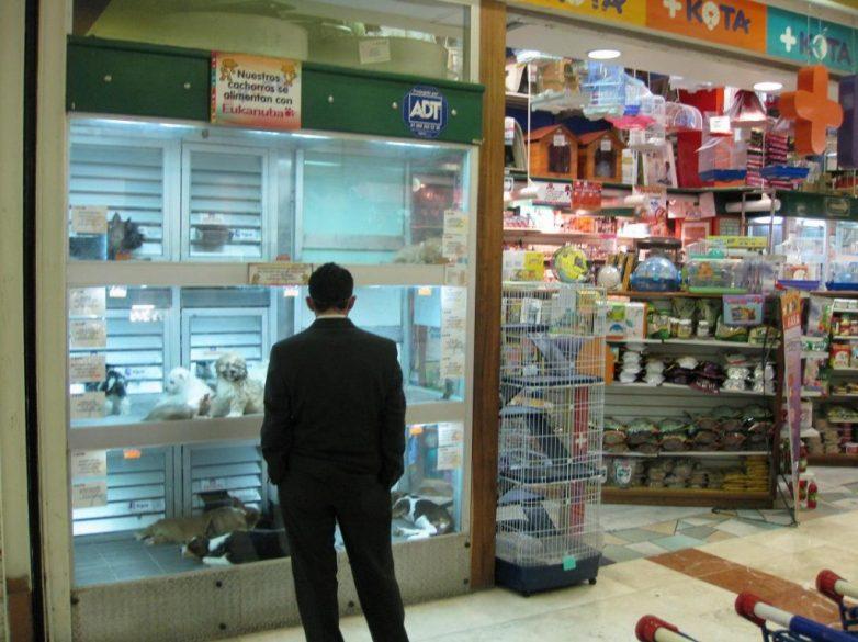 Οικολόγοι-Πράσινοι: Άμεση απαγόρευση  πώλησης ζώων από καταστήματα