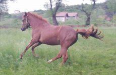 Άλογο και γάϊδαρος «βολτάριζαν»στον περιφερειακό και στην Ε.Ο.