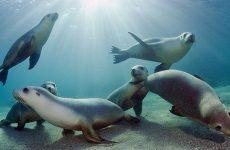 Συνεδριάζει  ο Φορέας Διαχείρισης Θαλασσίου Πάρκου Αλοννήσου