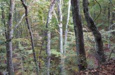 Σε δόσεις η εξαγορά δασών