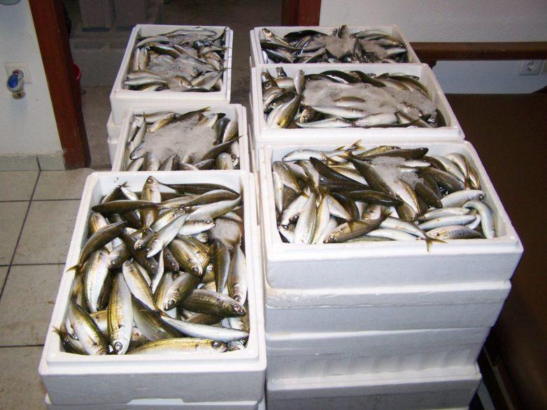 Νεαρός υπεξαίρεσε 4,7 τόνους ψαριών και συνελήφθη στον Αλμυρό