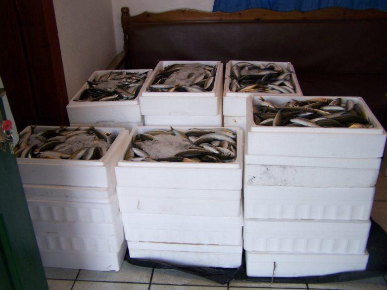 Οι τσιπούρες και τα λαβράκια έγιναν αιτία να «φάει» 4 μήνες φυλακή 31χρονος