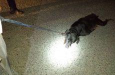Φρικτή θανάτωση σκύλου στον Αλμυρό