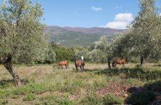 Δραστηριότητα άθλησης και αναψυχής με άλογα στην Κάρλα