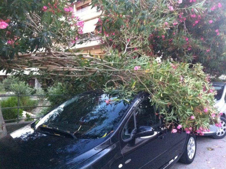 Μικροφθορές σε αυτοκίνητα από πτώση δέντρου στην Κασσαβέτη